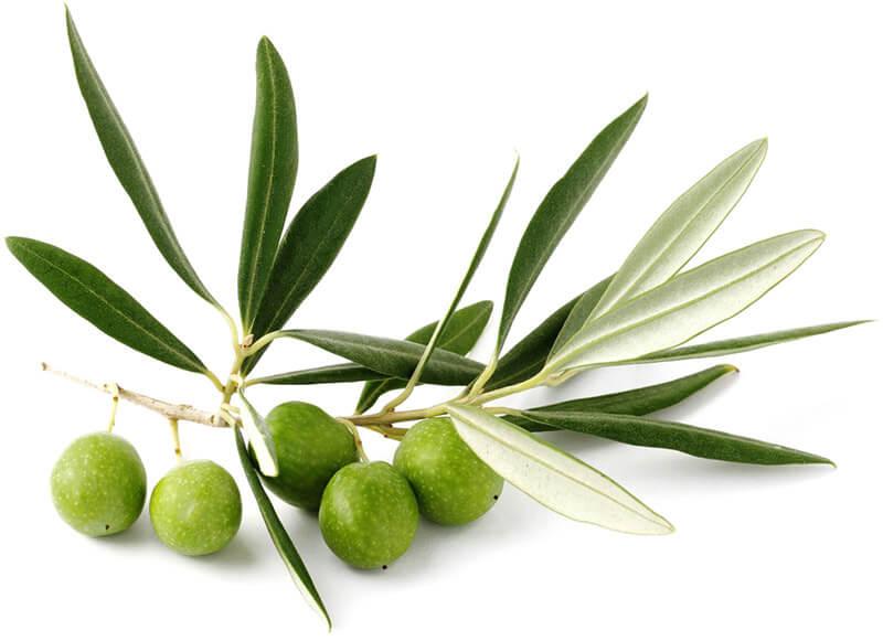 Imagen del activo olivoleina